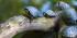 Obbligo di denuncia testuggine palustre americana e scoiattoli